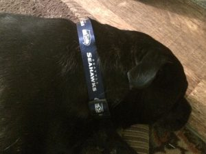 Seahawks collar on dog